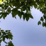 Spotlight, Spring 2020 – Cabin Fever